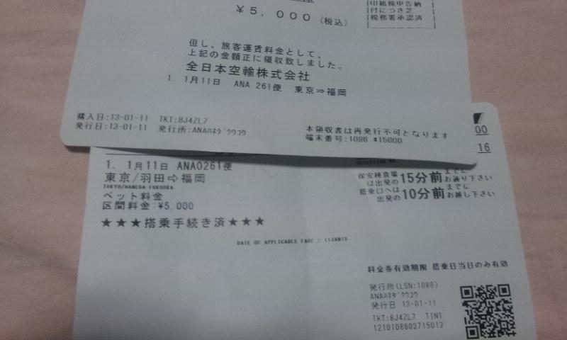 うさぎの飛行機搭乗料金は5000円2