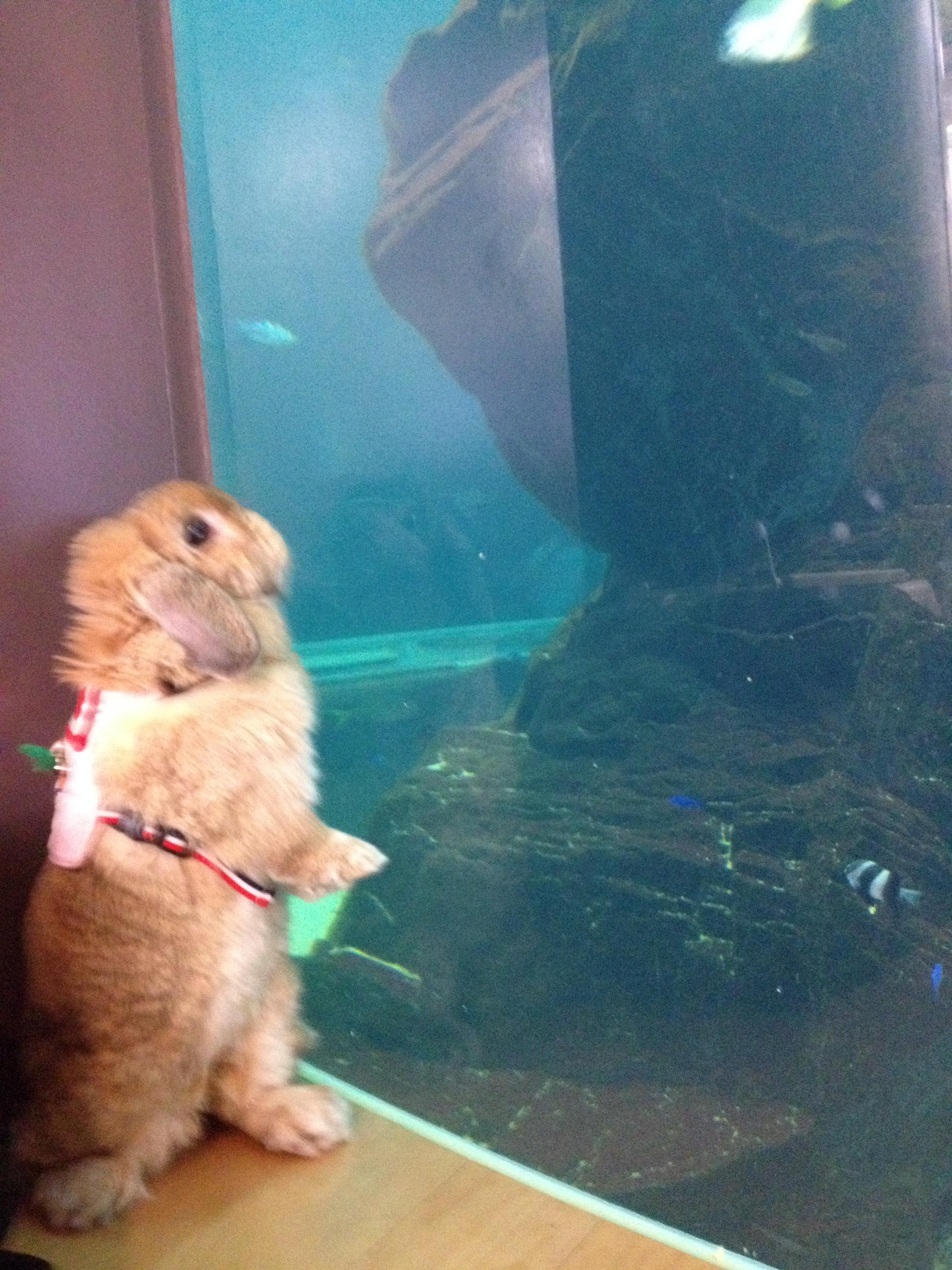 水族館は楽しいなぁ2