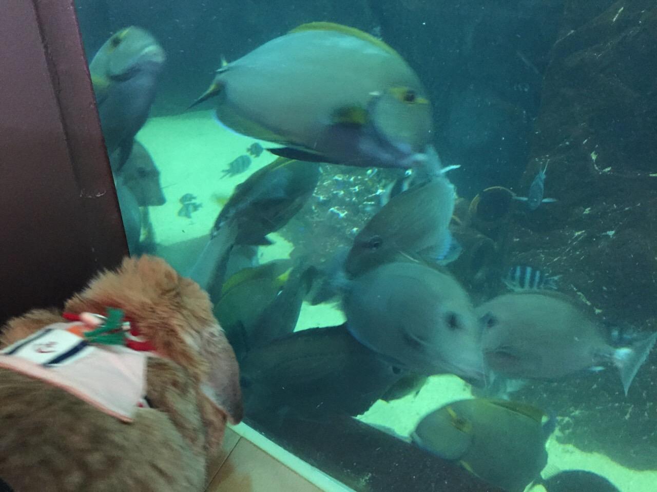 水族館は楽しいなぁ