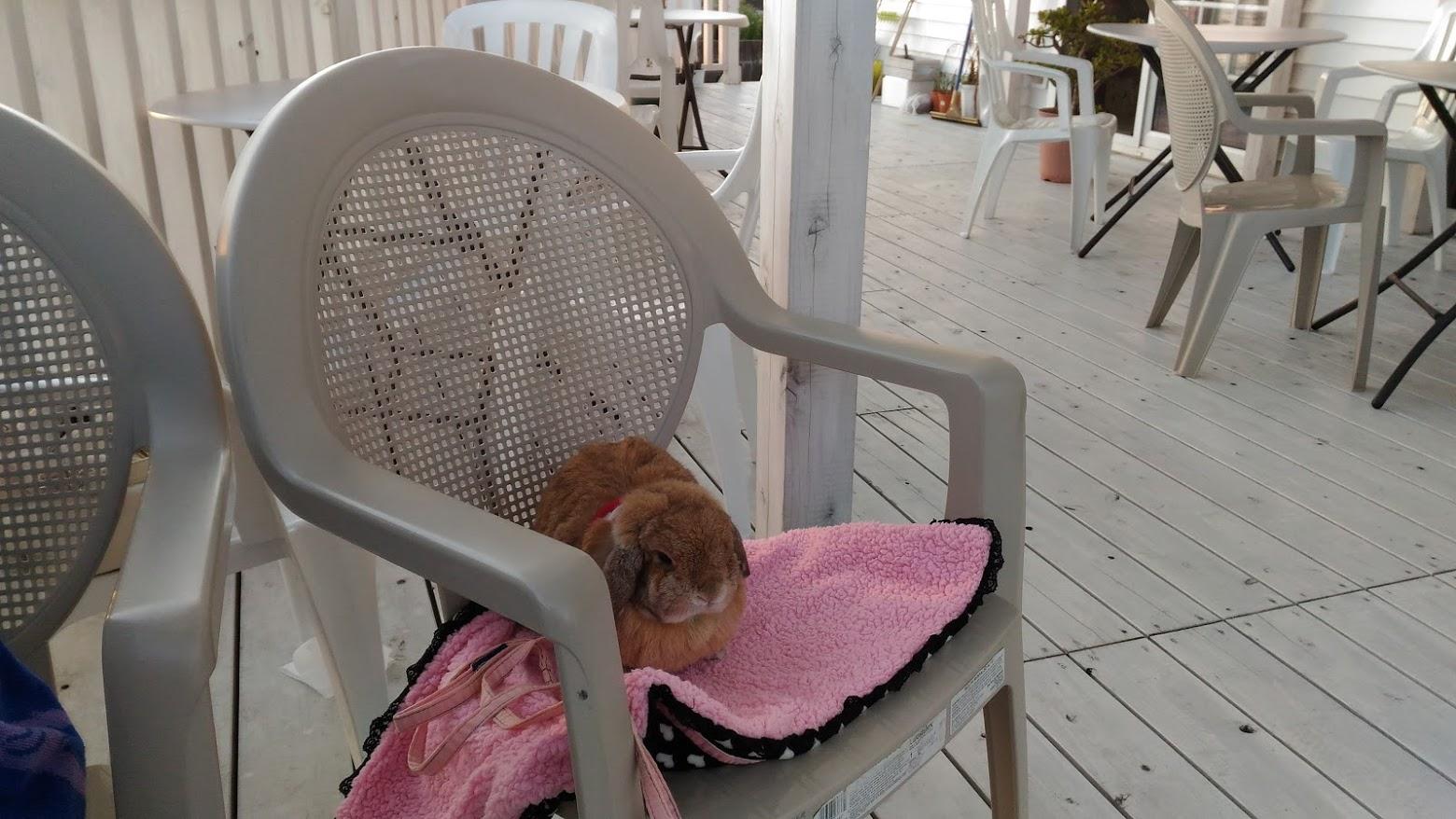 海辺のカフェでうさんぽ2